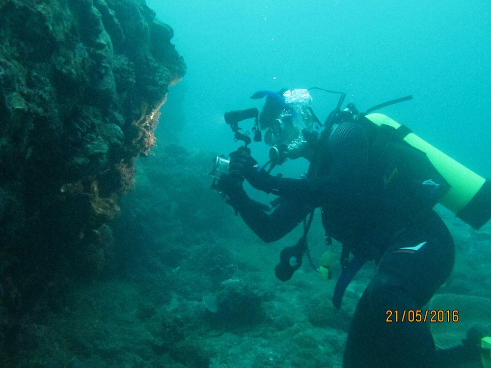 港澳海洋生物绘画